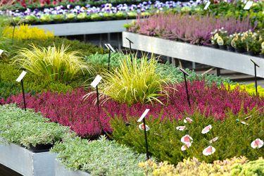 najaar-bloemen