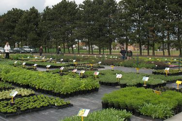 veld-vaste-planten