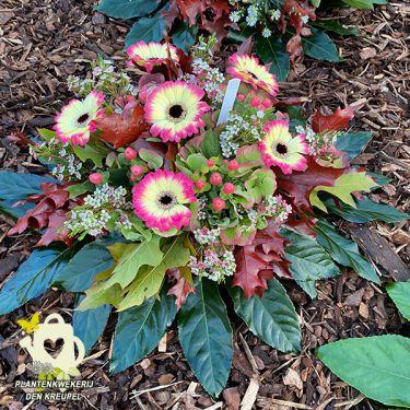 a1-bloemstuk-gerbera-tweekleurig