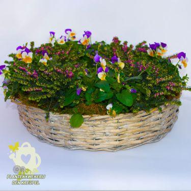 allerheiligen-winterheide-viooltje